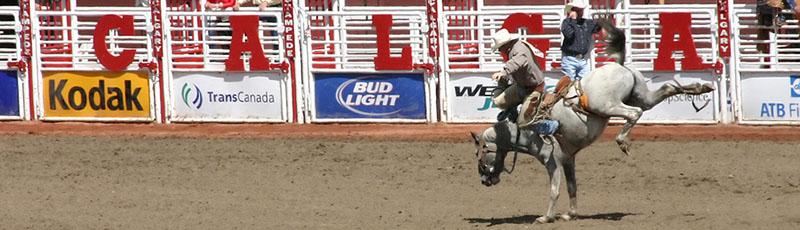 Bronco Cowboy in Calgary